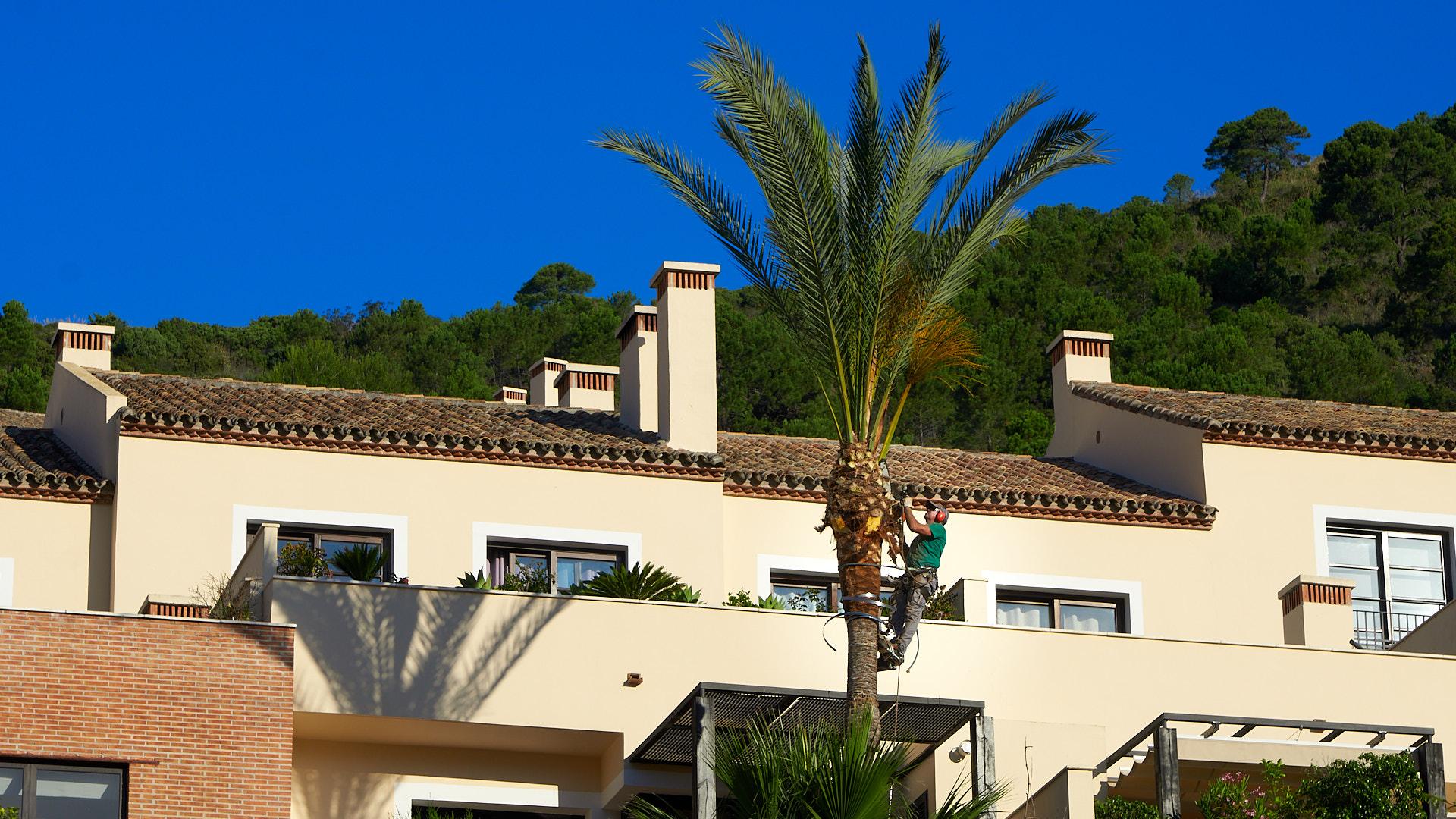 Palm Tree Maintenave